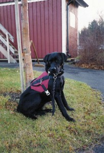 Servicehunden Vicky